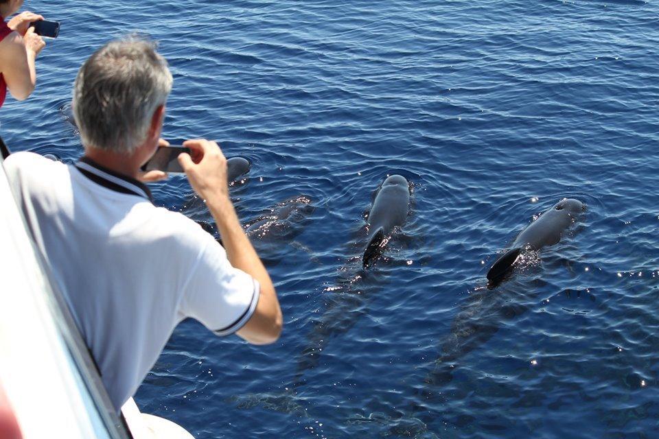 Walschutzgebiet in Ligurien: Ein Aquarium unter freiem Himmel